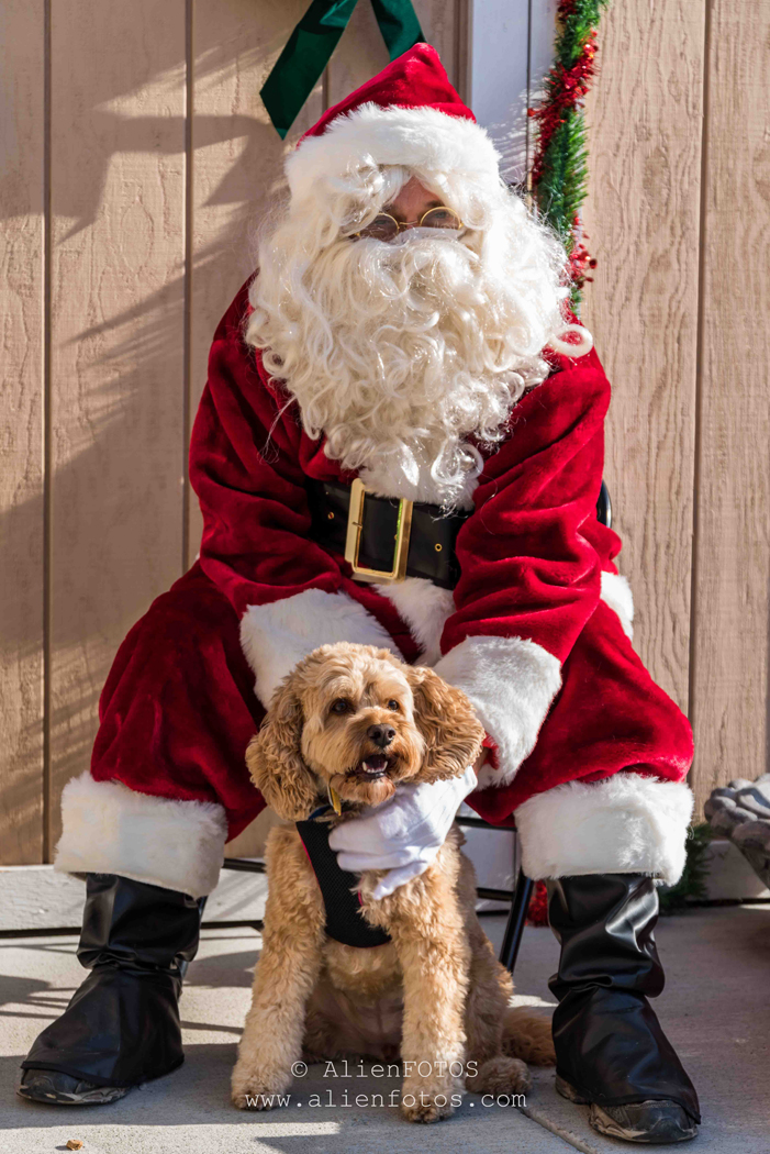 Portrait 4869 (Santa with a Dog)