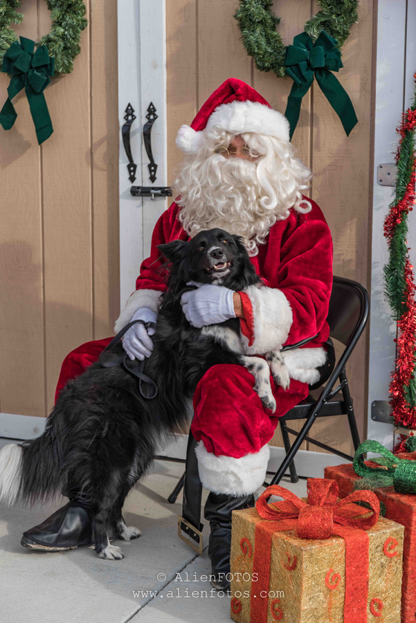 Portrait 4925 (Santa with a Dog)